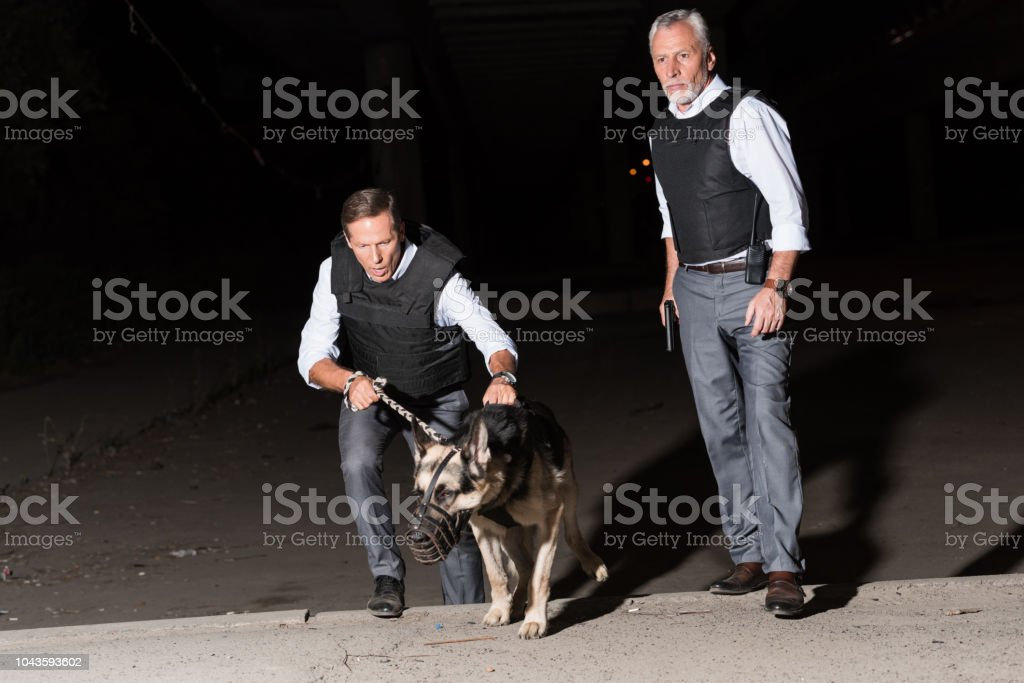 serious male police officers with german shepherd dog on leash at street stock photo