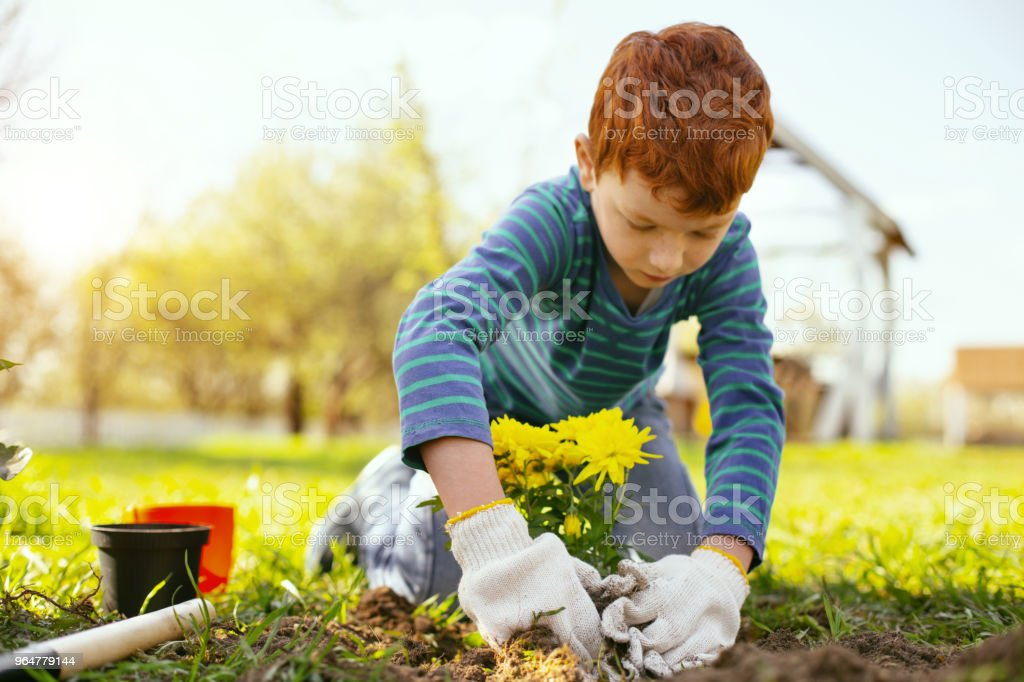 Serious pleasant boy wearing gloves royalty-free stock photo