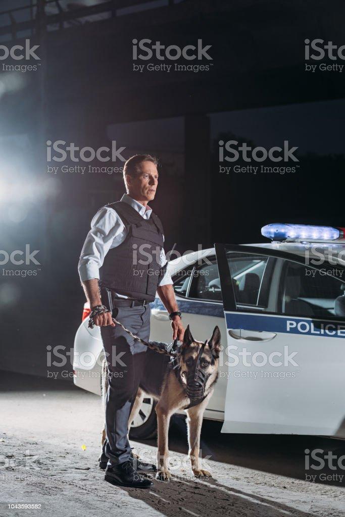 serious policeman in bulletproof vest holding german shepherd dog on leash near car at city street stock photo