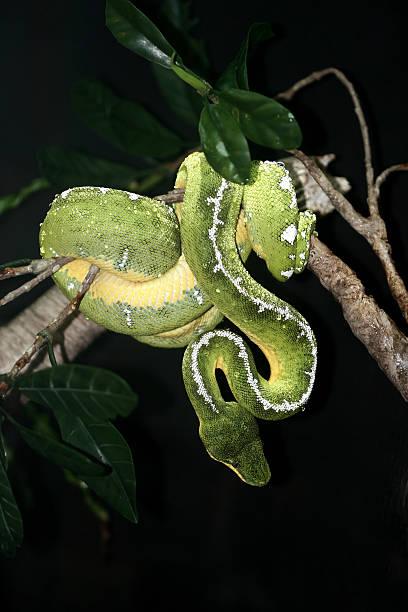 Serpent stock photo
