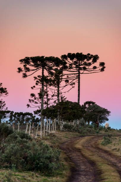 Serra Catarinense - Brazil stock photo