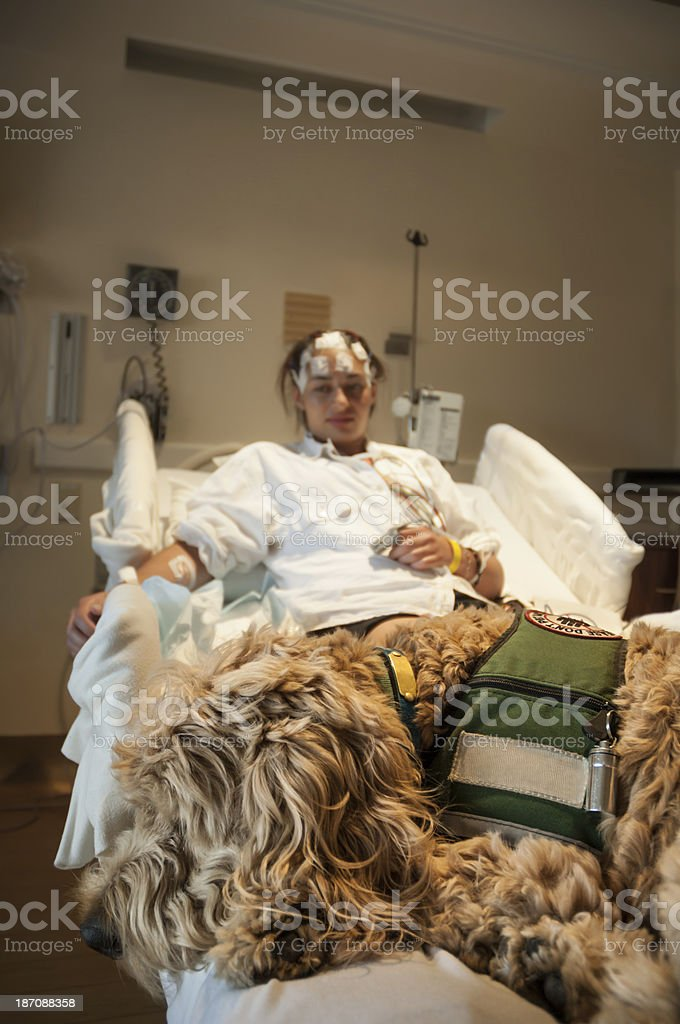 Service dog comforting a patient in the hospital stock photo