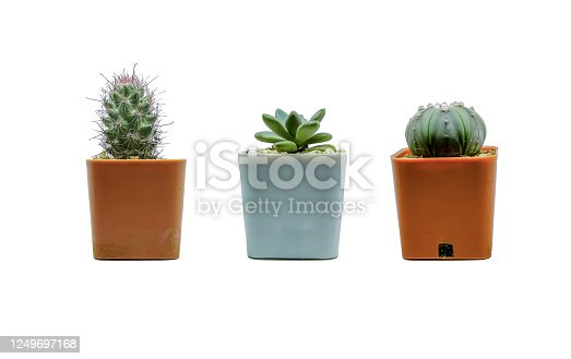 Set Collection  Small cactus on a white background
