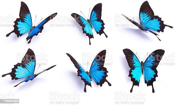 Set of 6 blue butterfly isolated on white background picture id178863659?b=1&k=6&m=178863659&s=612x612&h=dllhwpigno1ixjapze2bwncibatiyxjzen4mns4twce=