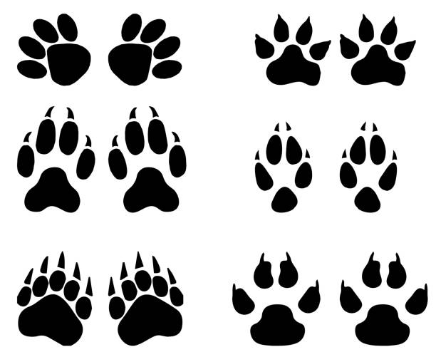 Set of animal  trails, footprints with name isolated on white background. silhouettes  illustration stock photo