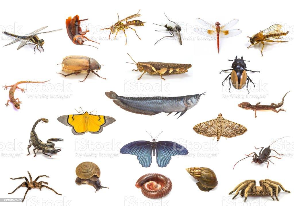 Set of animals on white background stock photo