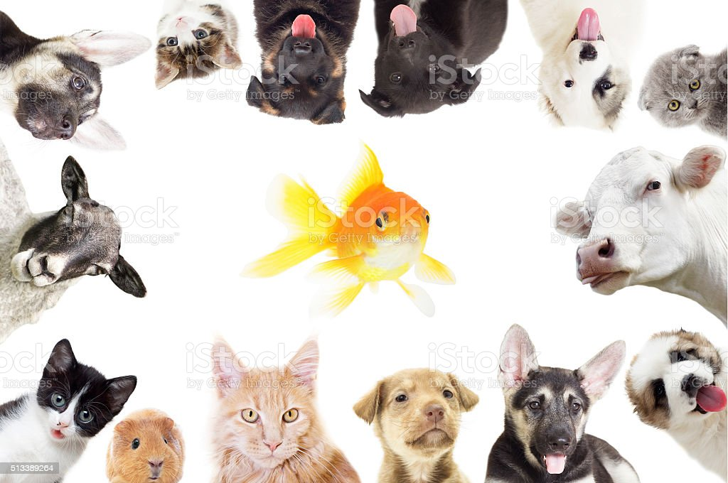 set of  animals stock photo