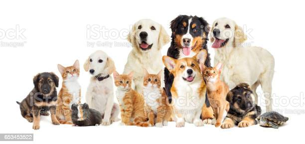 Set of animals picture id653453522?b=1&k=6&m=653453522&s=612x612&h=0uzrlcnvb8j0r2rfe1xq esiwj a fr0vpwsuouaw8s=