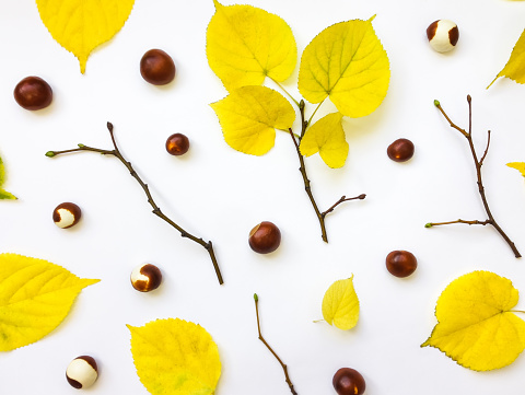 Set of autumn leaves, chestnuts and branches. Top view