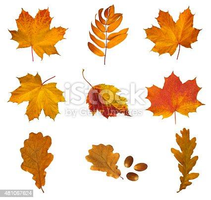 istock Set of autumn leaves 481067624