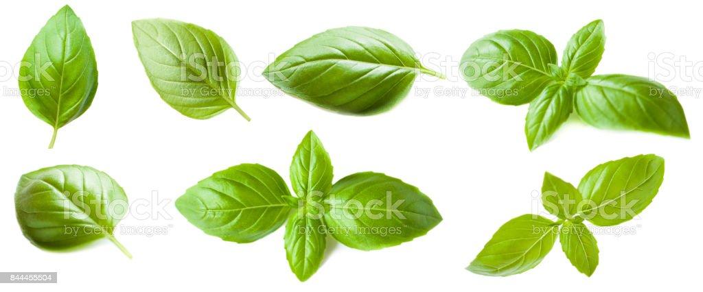 Conjunto de folha de manjericão, isolado no fundo branco. Macro. Vista superior. - foto de acervo