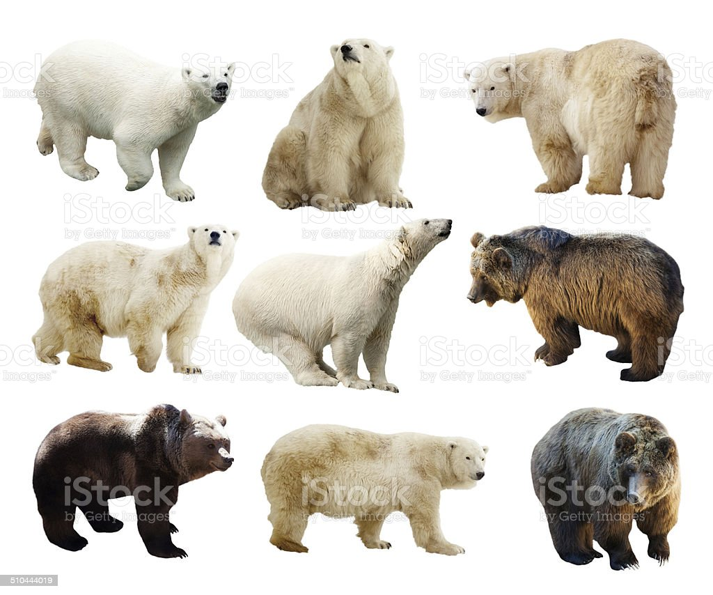 Set of bears. Isolated over white stock photo