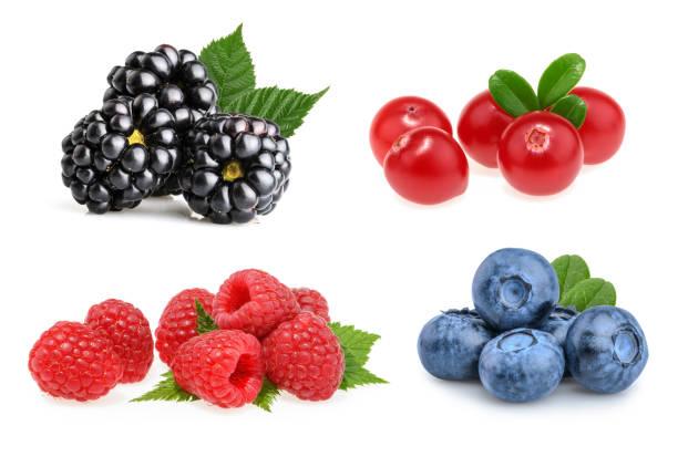 Satz von schöne Früchte (Brombeeren, Preiselbeeren, Himbeeren, Heidelbeeren) – Foto