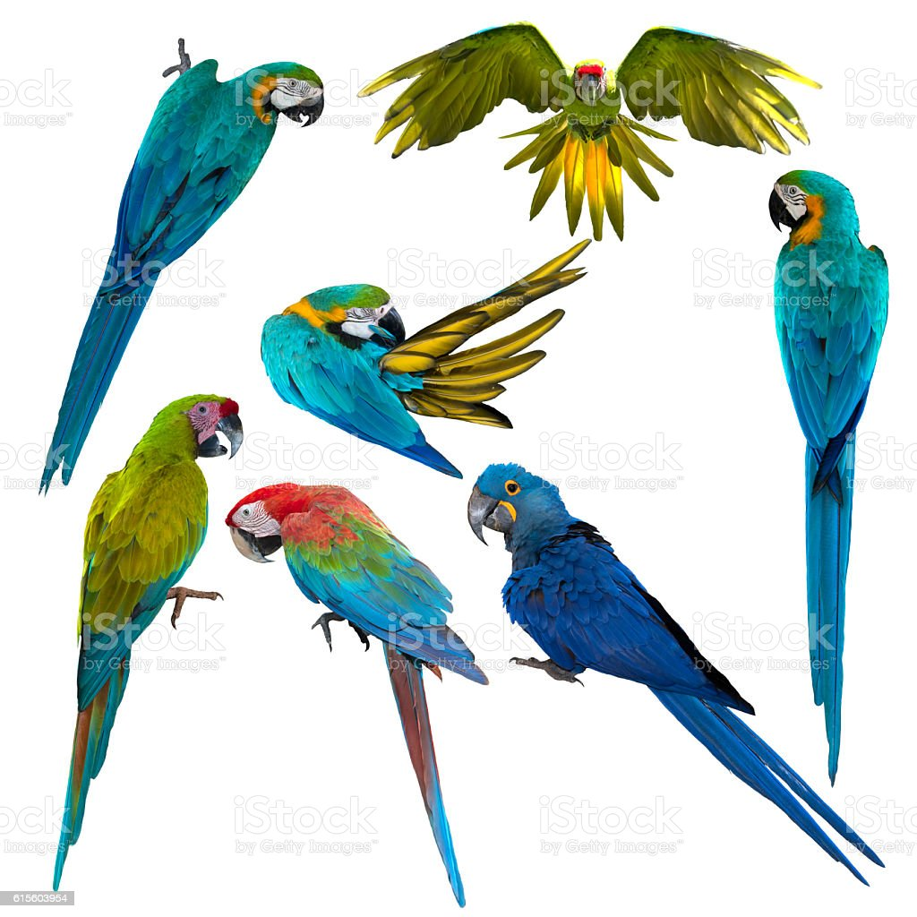 Set of beautiful macaw birds, Beautiful macaw - foto de acervo