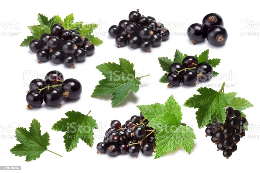 Set of blackcurrant berries (Ribes Nigrum) and leaves, paths stock photo