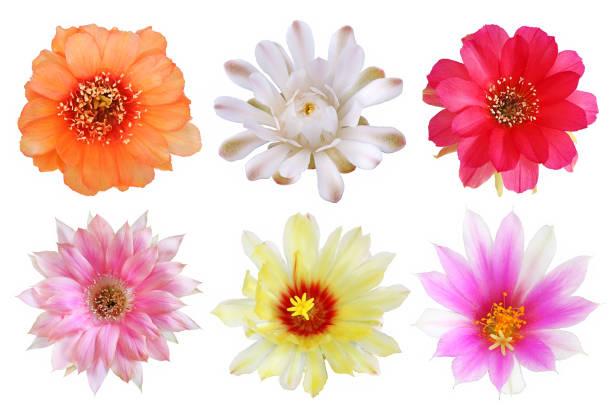 Set of bloom colorful flowers cactus picture id1168867198?b=1&k=6&m=1168867198&s=612x612&w=0&h=jz3qigt4pmlovngrhnq1zlhwn25qcp4qqec2gw gpe8=