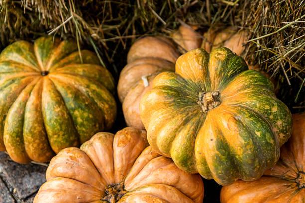 set of bright pumpkins orange and green, background mini ribbed vegetables - pumpkin pie стоковые фото и изображения