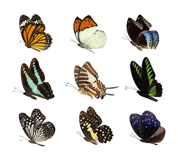 set of butterfly isolated on white - schmetterling stock-fotos und bilder