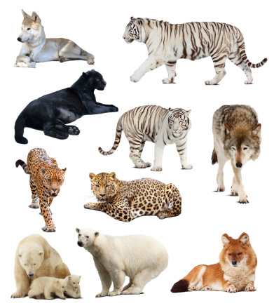 Set of  carnivores animals. Isolated over white background with shade