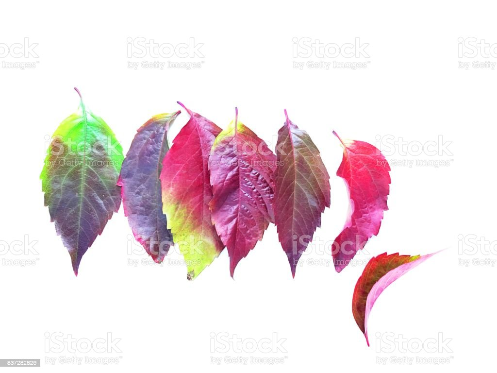 Set of colorful autumn leaves stock photo