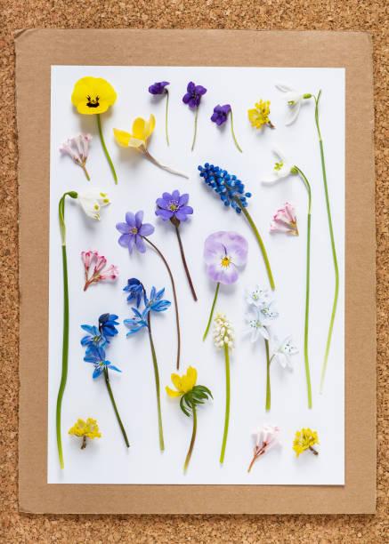 野生のカラフルな春の花のセットです。 - 押す ストックフォトと画像