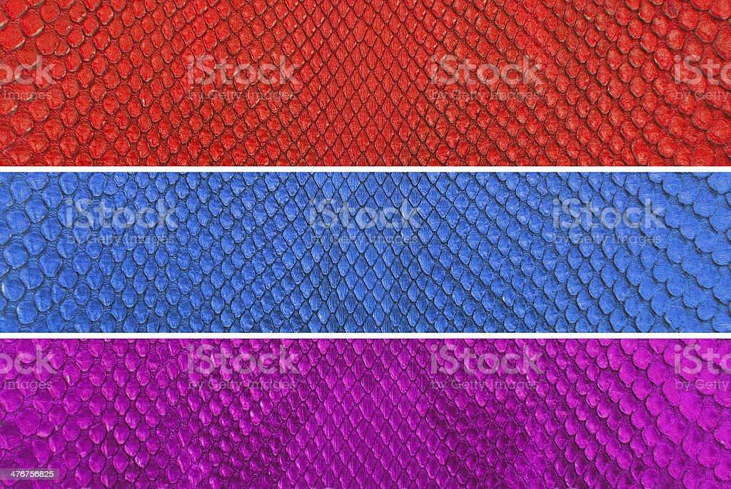 Set of Colourful python snake skin texture background. royalty-free stock photo