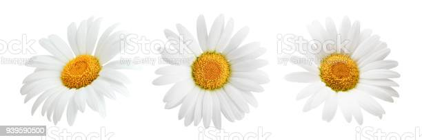 Set of daisy flower isolated on white background picture id939590500?b=1&k=6&m=939590500&s=612x612&h=q6cuzn8hkzrqx98dvkurt50 b0nh11ltczhay3iemyo=