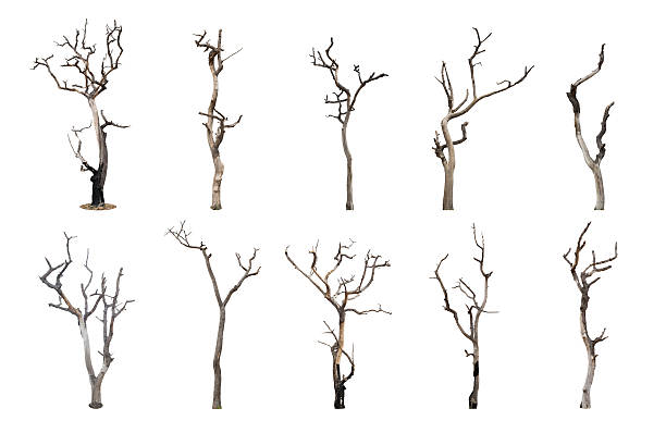 set of dead tree isolated on white background - plantdeel stockfoto's en -beelden