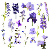 Set of different blue flowers isolated on white background. Blue, purple and violet flowers