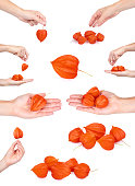 set of different exotic fresh orange physalis. Woman hand. isolated on white background.