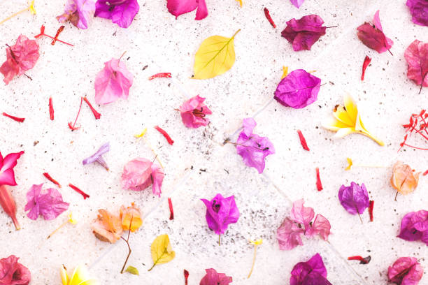 Set of different tropical bali flowers on white textured background. Colorful Flat-lay stock photo