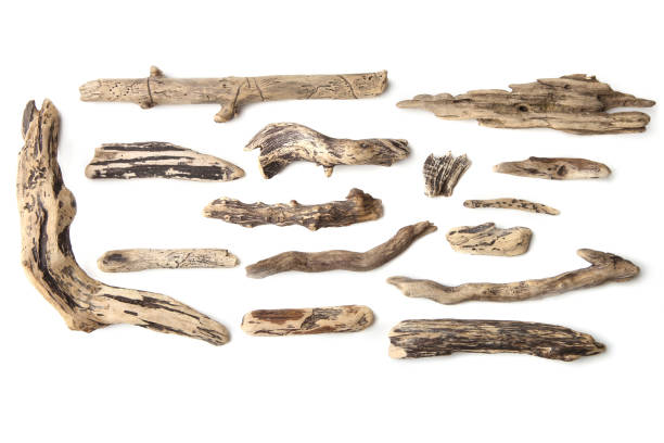 Set of driftwood isolated on white background. Pieces of river drift wood. driftwood stock pictures, royalty-free photos & images