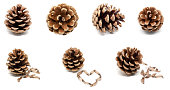 istock Set of dry brown pine cones with seeds isolated on white background 1255030898