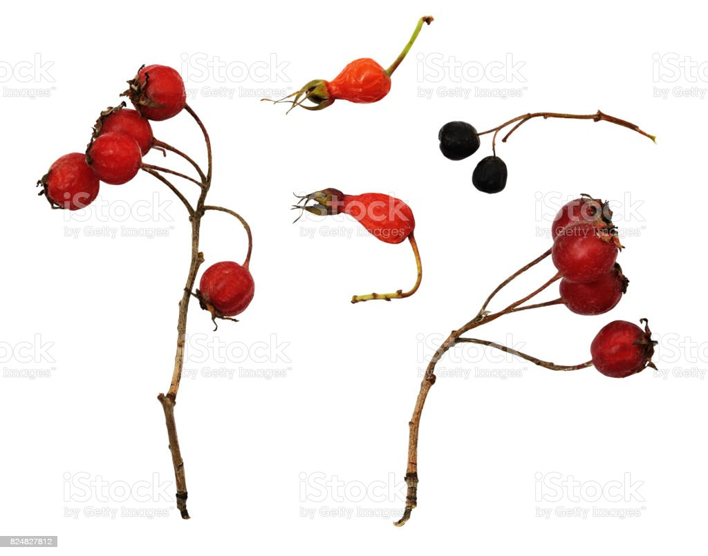 Set of dry red and black berries stock photo