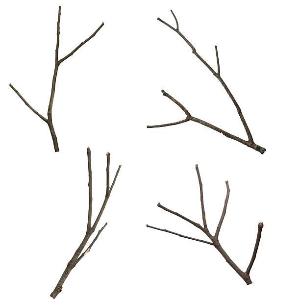 ensemble d'arbre sec branche, isolé sur fond blanc - branche partie photos et images de collection