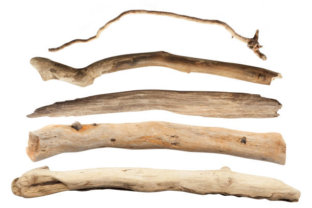 Set of dry tree branch Isolated with Clipping Path stock photo