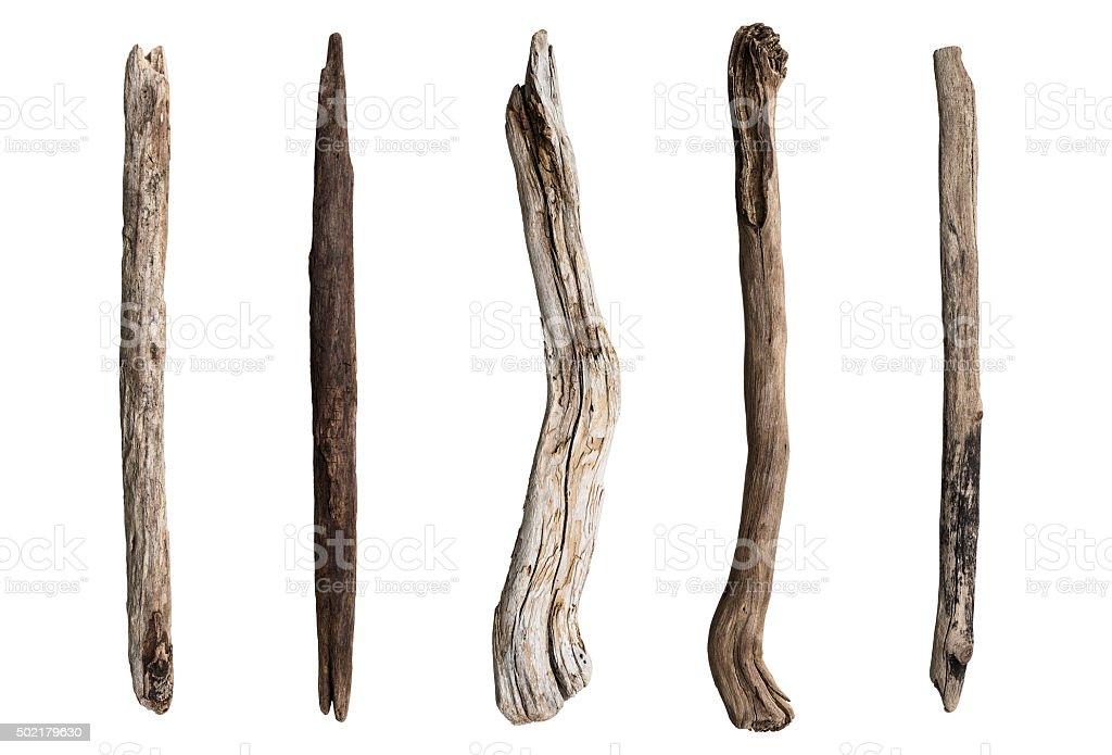 Conjunto de árbol seco de derivación - foto de stock