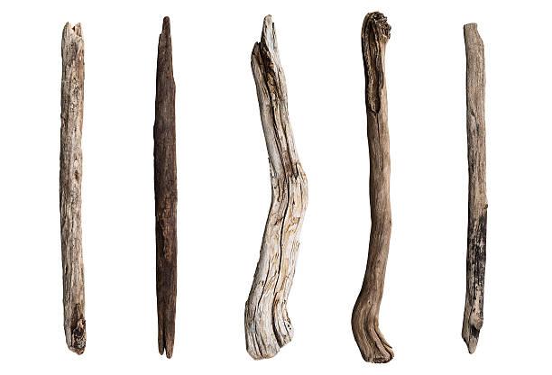 Set of dry tree branch stock photo