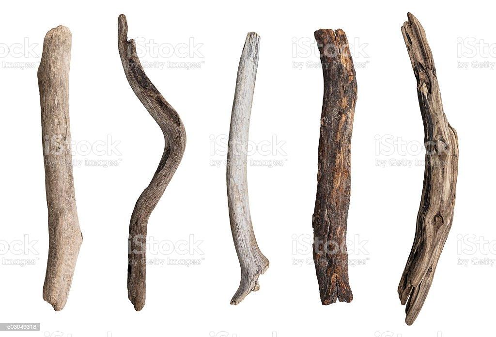 Conjunto de serviços de galho de árvore - foto de acervo