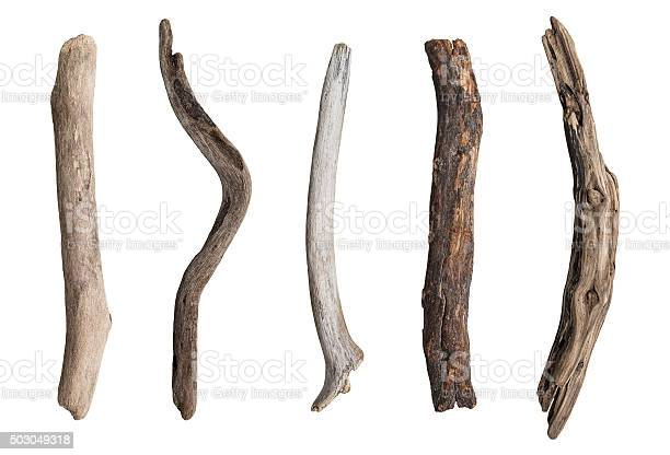 Photo of Set of dry tree branch