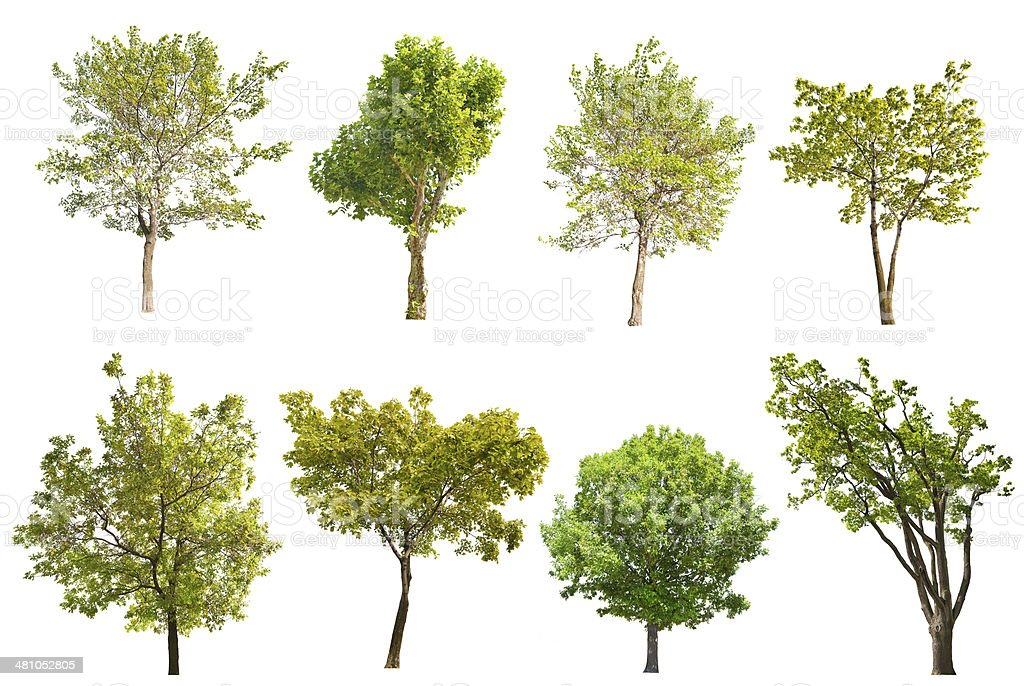 set of eight green trees isolated on white stock photo