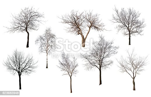 set of trees without leaves isolated on white backgriund