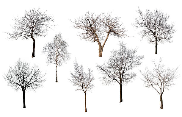 set of eight trees without leaves - Photo