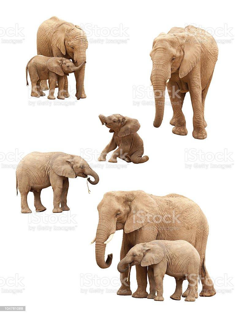 Set of Elephants Isolated stock photo