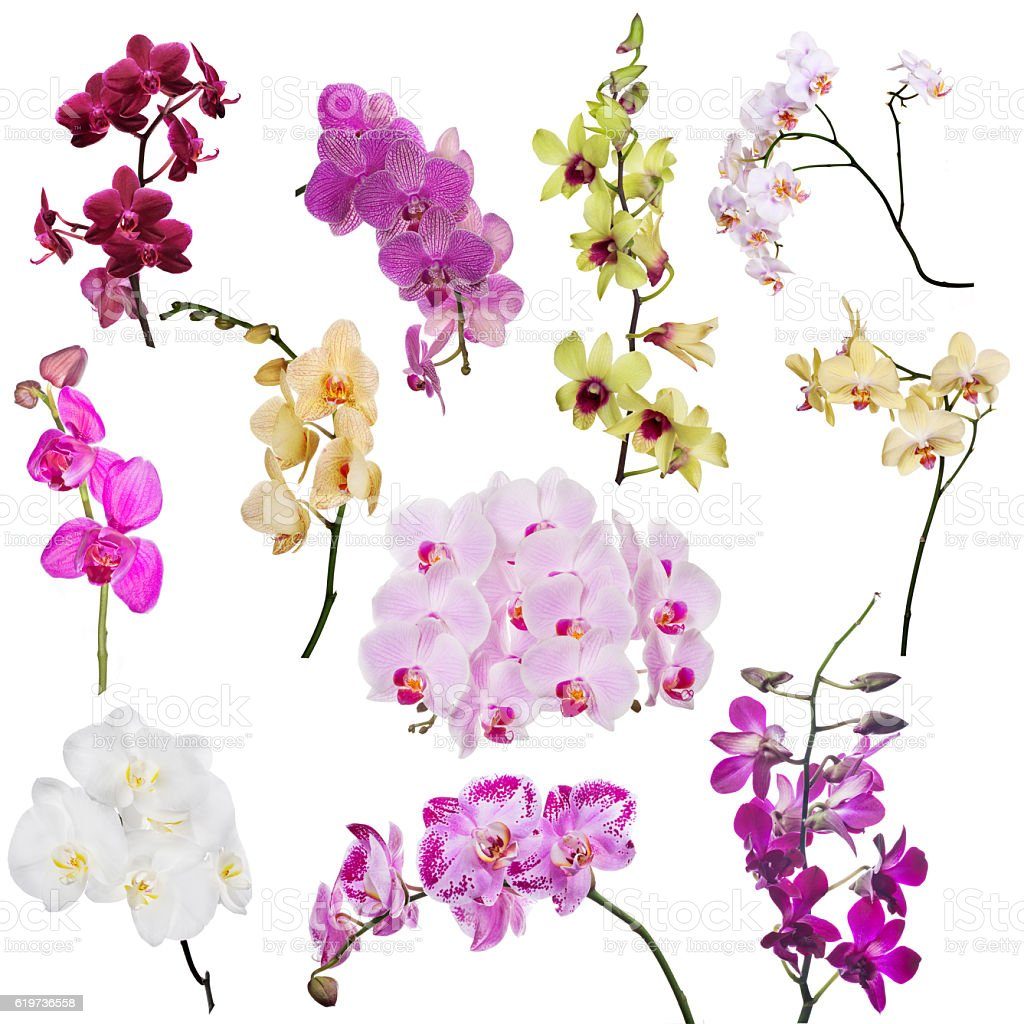 set of eleven orchid floral branches isolated on white stock photo