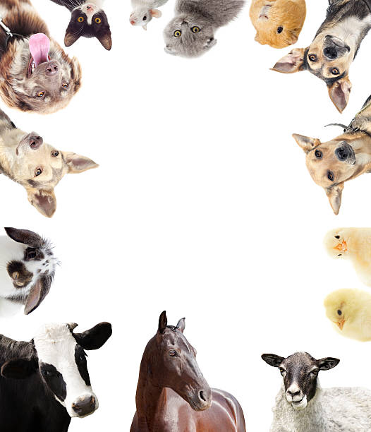 set of farm animals stock photo