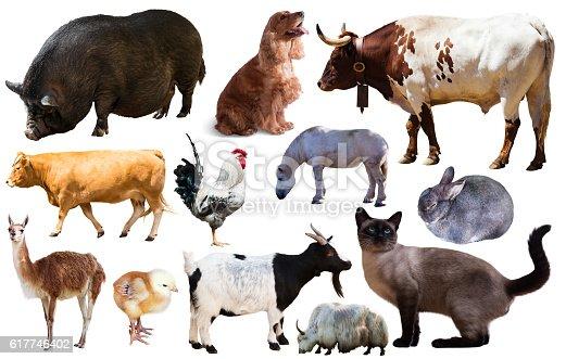 istock set of farm animals 617746402