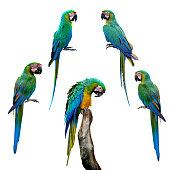 Macaw parrot close up