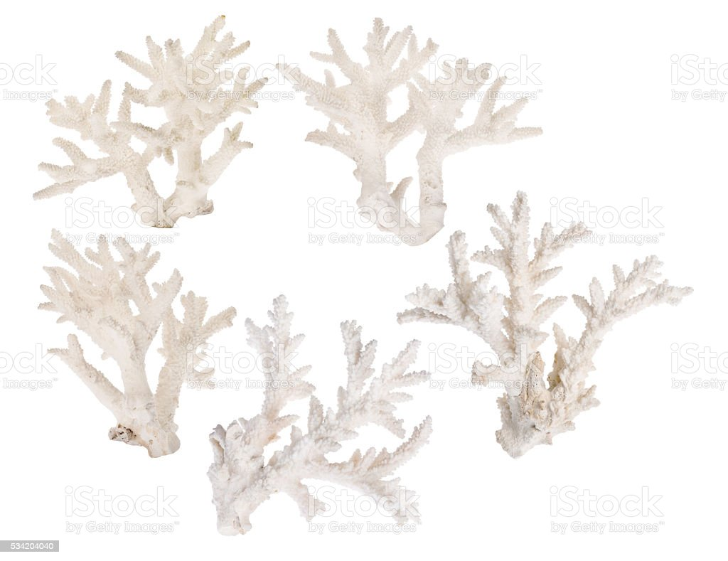 set of five light coral branches on white stock photo