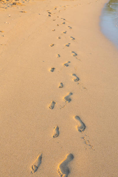 Set of Footprints in the Sand on Hawaii Beach stock photo